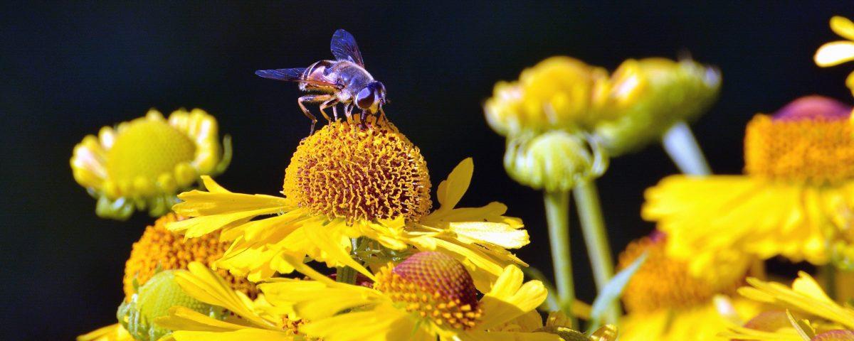 ecologie abeilles apiculture