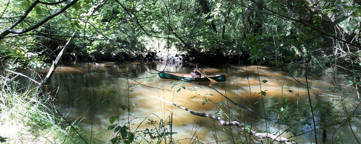 leyre kayak bassin arcachon ecotours team building originaux