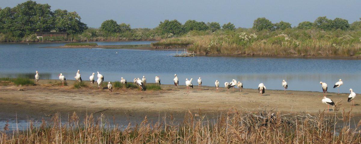 Parc du Teich Article Arcachon Ecotours 1