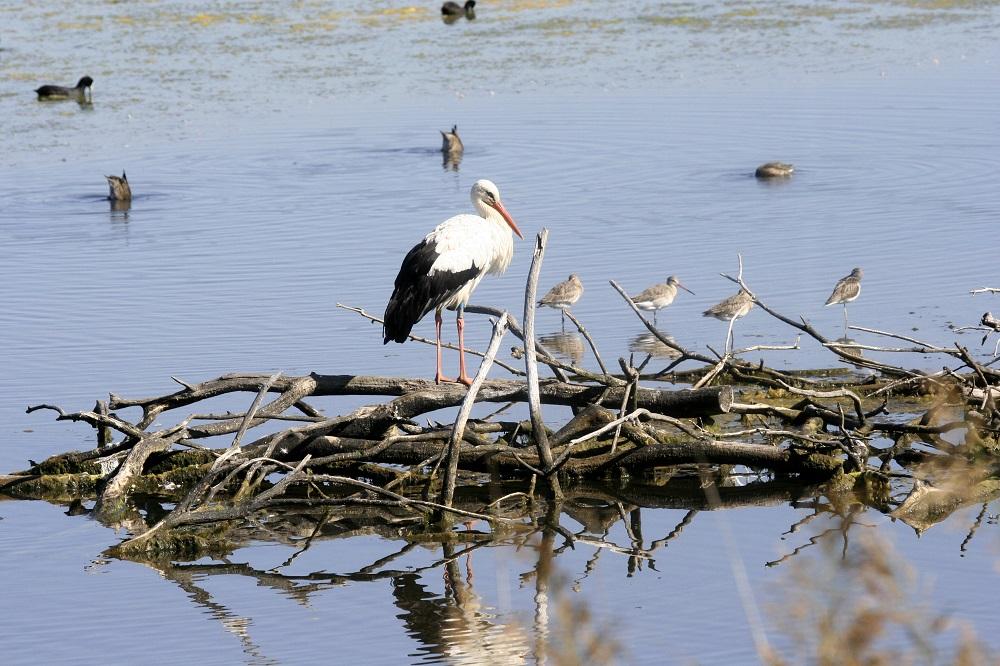 Parc du Teich Article Arcachon Ecotours 3