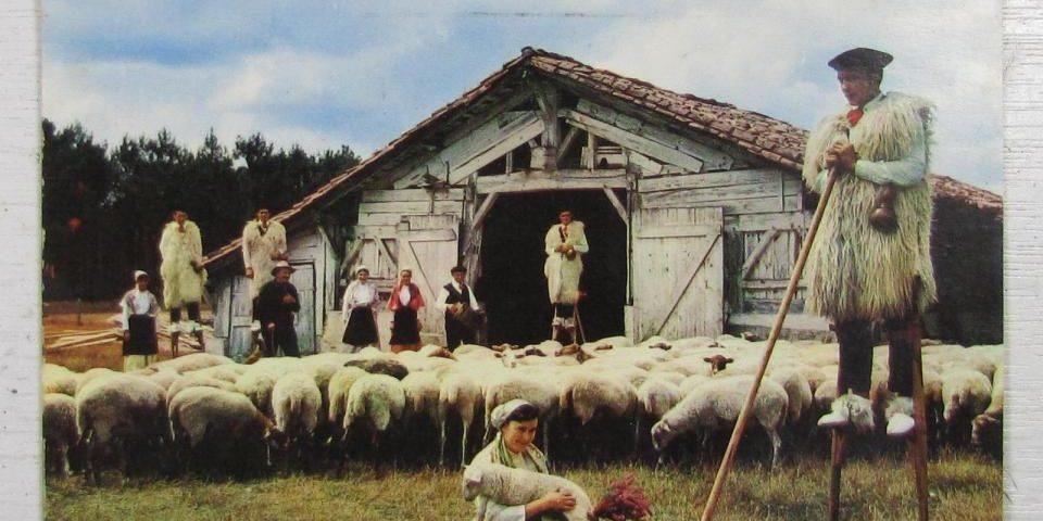histoire du berger landais d'arcachon