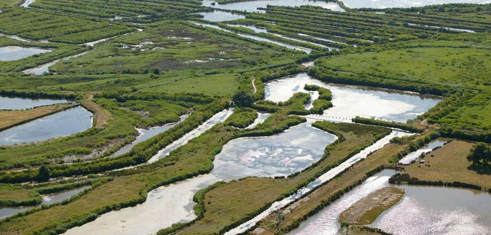 le delta du leyre à arcachon