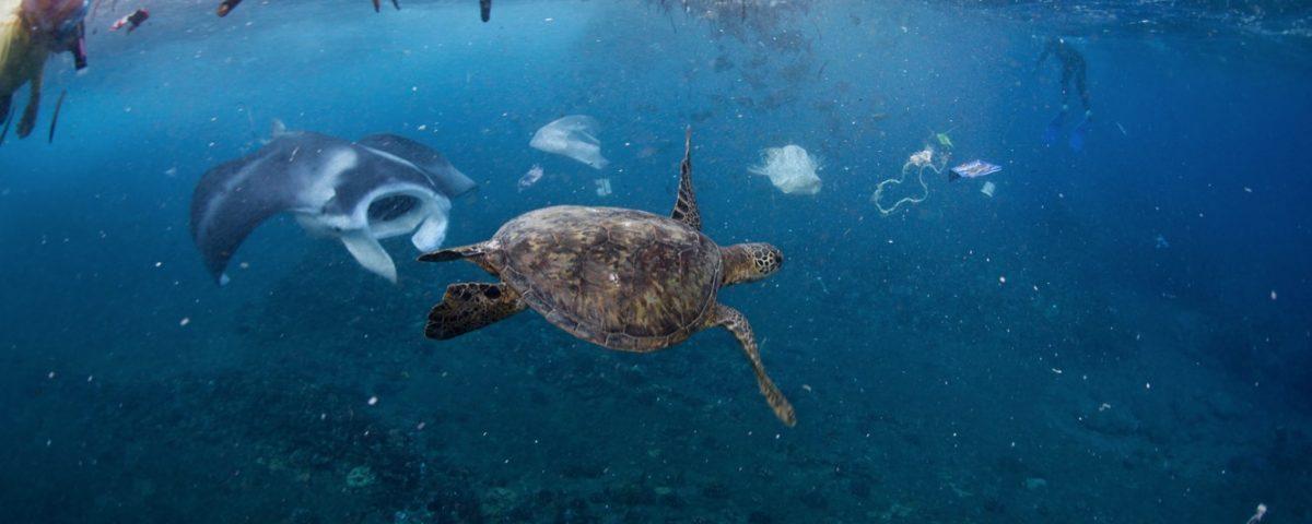 pollution des mers surfrider arcachon ecotours